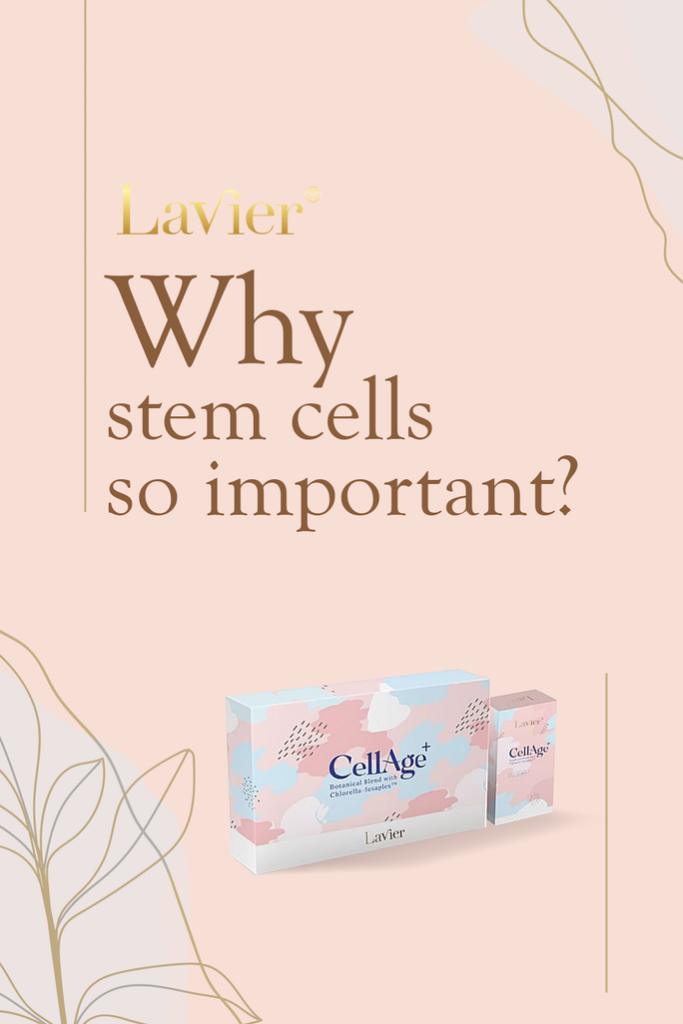 what are stem cells? why are them so important?