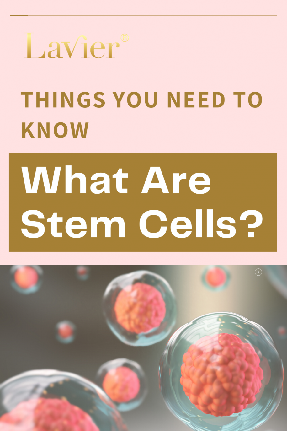 Things You Should Know What Are Stem Cells